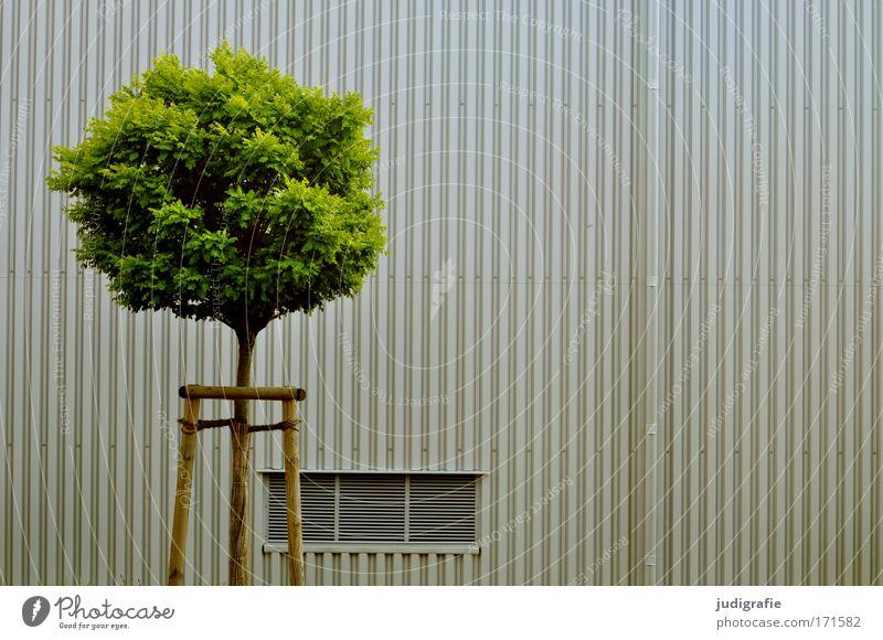 Stadtbegrünung Baum grün Stadt Gebäude Fassade Wachstum rund