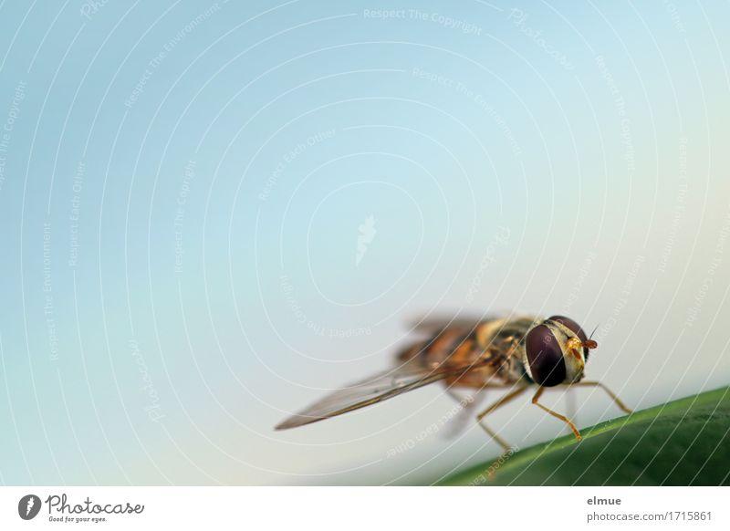 Zwischenstopp Natur Erholung Blatt Umwelt klein Design träumen Zufriedenheit elegant Wildtier Fliege sitzen Kommunizieren warten Energie Flügel