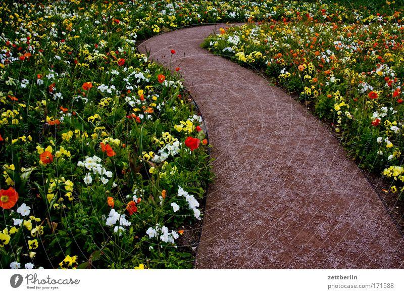 Blumen grün Pflanze Blüte Garten Wege & Pfade Park Blühend Kurve Gartenbau Beet biegen abbiegen Schrebergarten Blumenbeet Umweg