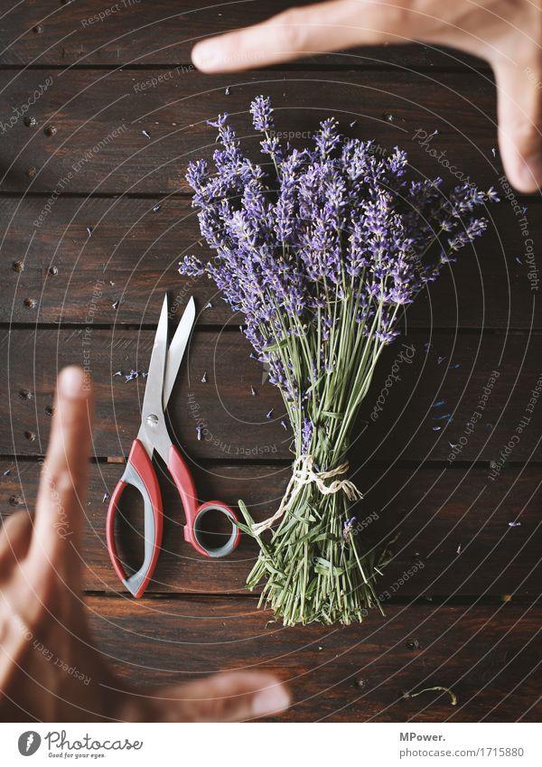 lavendelernte Lavendel violett Blumenstrauß Boden Bündel Pflanze Öl Geruch frisch Gesundheit Gesundheitswesen geschnitten Dekoration & Verzierung Hand