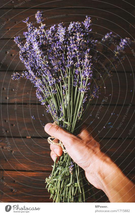 lavendel Lavendel violett Blumenstrauß Boden Bündel Pflanze Öl Geruch frisch Gesundheit Gesundheitswesen geschnitten Dekoration & Verzierung Hand festhalten