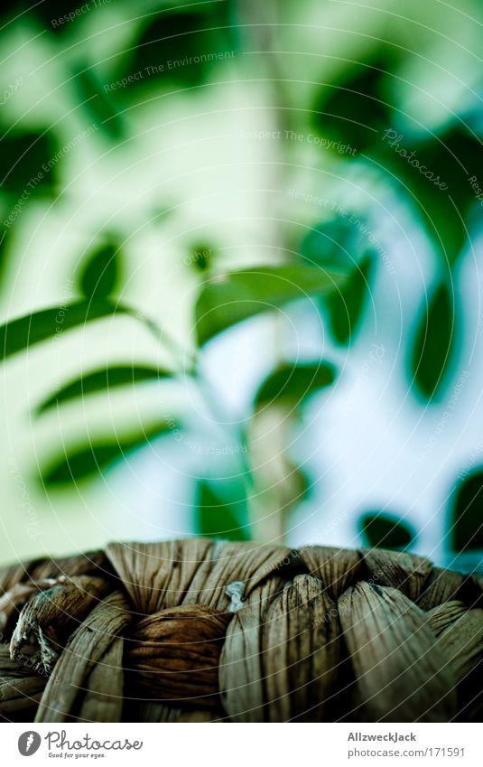 kreativitätskrise Farbfoto Innenaufnahme Nahaufnahme Experiment Menschenleer Tag Starke Tiefenschärfe Froschperspektive Natur Pflanze Blatt Grünpflanze Jasmin