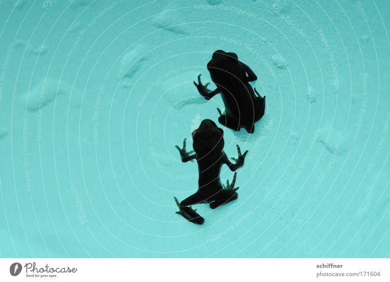 Froschtraum II - you'll never walk alone Makroaufnahme Froschperspektive Umwelt Natur Wasser Wassertropfen gehen Zusammenhalt Kröte Molch Tierpaar Zusammensein