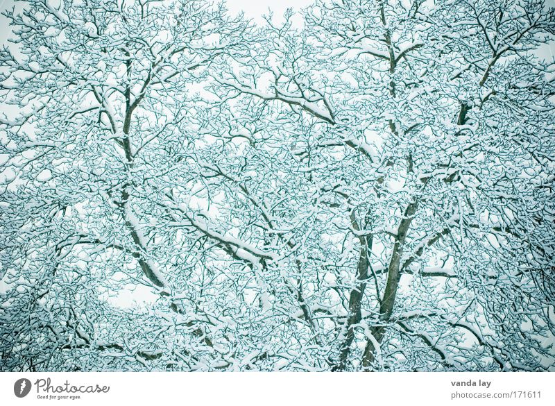 Kalte Struktur weiß Baum Pflanze Winter ruhig kalt Schnee Landschaft Eis abstrakt Umwelt Frost Ast Muster Dezember Februar