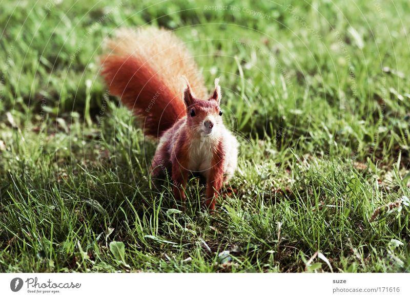 ... kann Karate! Natur grün Pflanze rot Tier Landschaft Umwelt Wiese Gras klein Klima Wildtier wild niedlich Neugier Fell