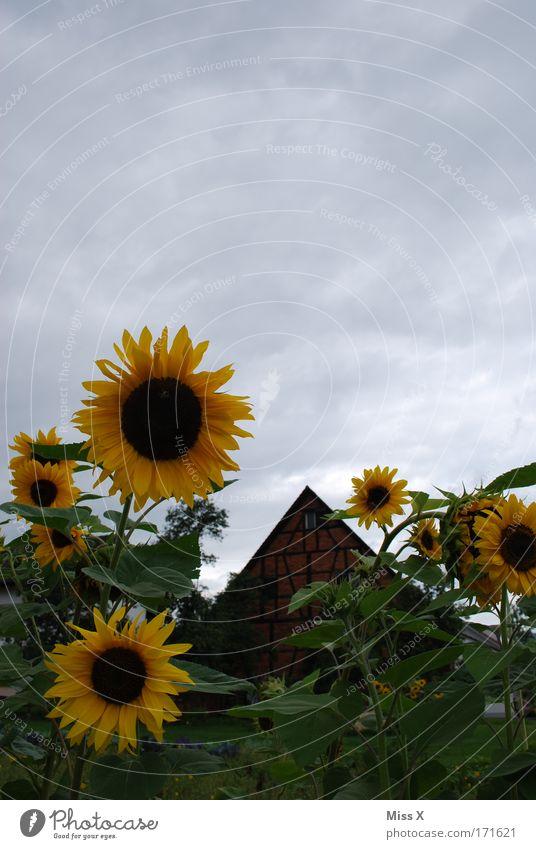 ein altes Haus Natur Pflanze Erholung Blüte Gras Garten Feld Dorf Landwirtschaft historisch Grundbesitz Landleben