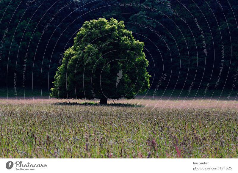 Einzelgänger Natur Ferien & Urlaub & Reisen grün Baum Pflanze Sonne Sommer Umwelt Wiese Berge u. Gebirge Gras Zeit Feld Freizeit & Hobby Tourismus Ausflug