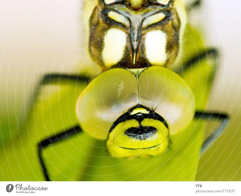Don't get too close! Natur grün Tier außergewöhnlich groß bedrohlich beobachten Technik & Technologie Neugier festhalten nah Vertrauen fantastisch Kontrolle hängen