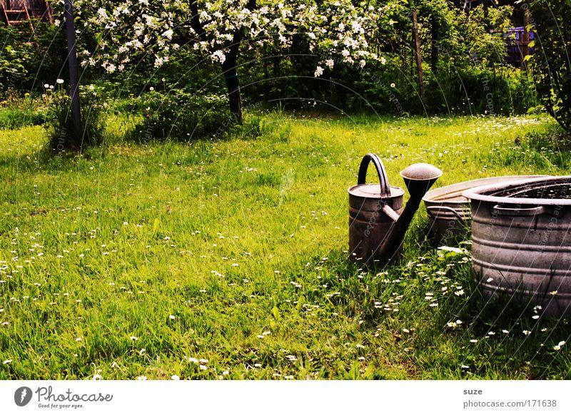 Volle Kanne Garten Gartenarbeit Umwelt Natur Pflanze Schönes Wetter Baum Gras Wiese Gießkanne authentisch Idylle grün Erholung Blühend Farbfoto Außenaufnahme