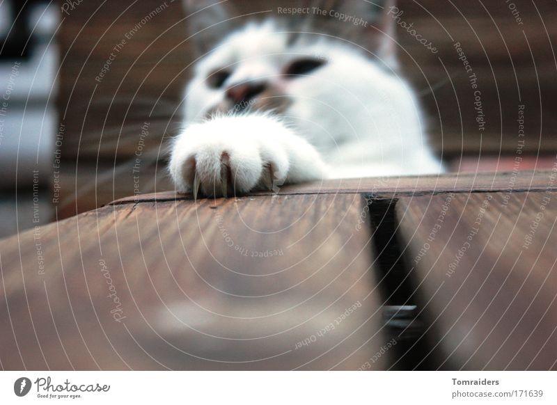 Jagtinstinkt Spielen Tisch Tier Haustier Katze 1 beobachten Blick frech Neugier Farbfoto Außenaufnahme Nahaufnahme Textfreiraum unten Abend