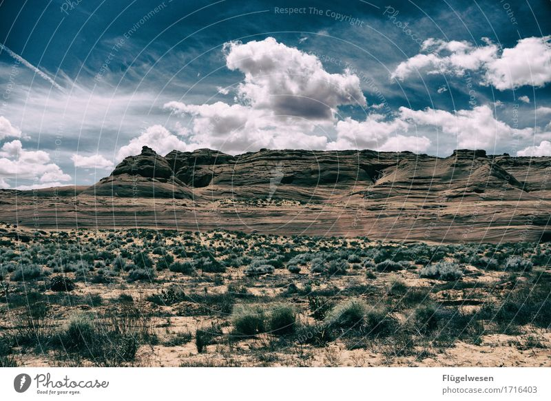 Beautiful Amerika (j) Himmel Ferien & Urlaub & Reisen Pflanze Landschaft Wolken Tier Ferne Berge u. Gebirge Freiheit Sträucher Aussicht USA Hügel Wüste