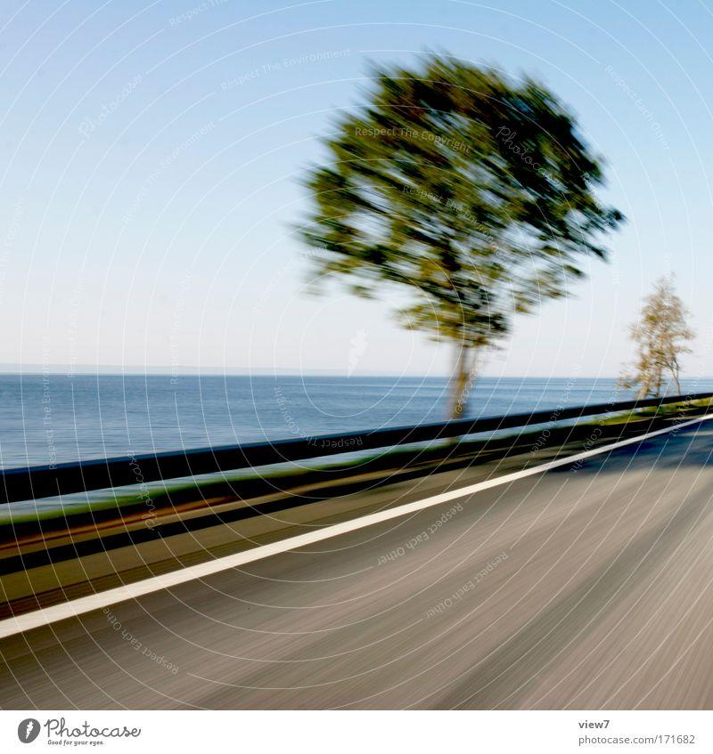 Die Bäume, sie fahren! Natur Himmel Baum Pflanze Ferien & Urlaub & Reisen Ferne Straße Freiheit träumen Landschaft Stimmung Küste Wetter Umwelt Verkehr Geschwindigkeit