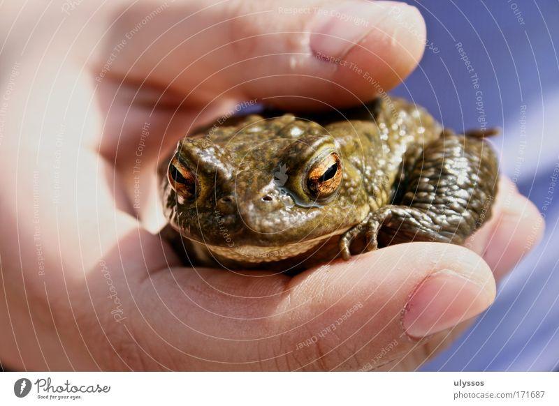 Froschkönig Mensch Hand grün Tier kalt klein glänzend nass außergewöhnlich Finger Sicherheit einzigartig Schutz Vertrauen Frosch Partnerschaft