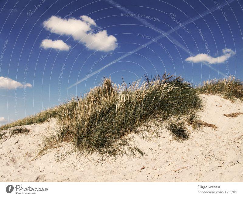 Hach, was war das für ein geiler Strandtag... Himmel Ferien & Urlaub & Reisen Pflanze Sommer Meer Wolken Erholung Umwelt Sand Küste Zusammensein Klima