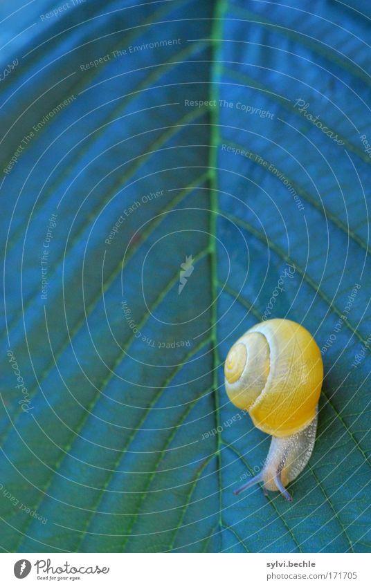 in meinem alter geht es nur noch bergab! Natur Pflanze grün Sommer Baum Blatt Tier gelb Bewegung klein Wildtier Gelassenheit unten abwärts krabbeln Schnecke