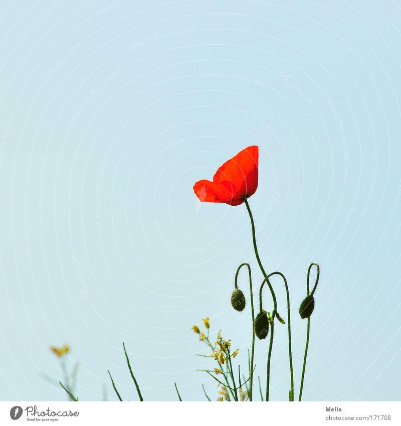 Stolz Farbfoto mehrfarbig Außenaufnahme Menschenleer Textfreiraum links Textfreiraum oben Tag Zentralperspektive Totale Umwelt Natur Pflanze Wolkenloser Himmel