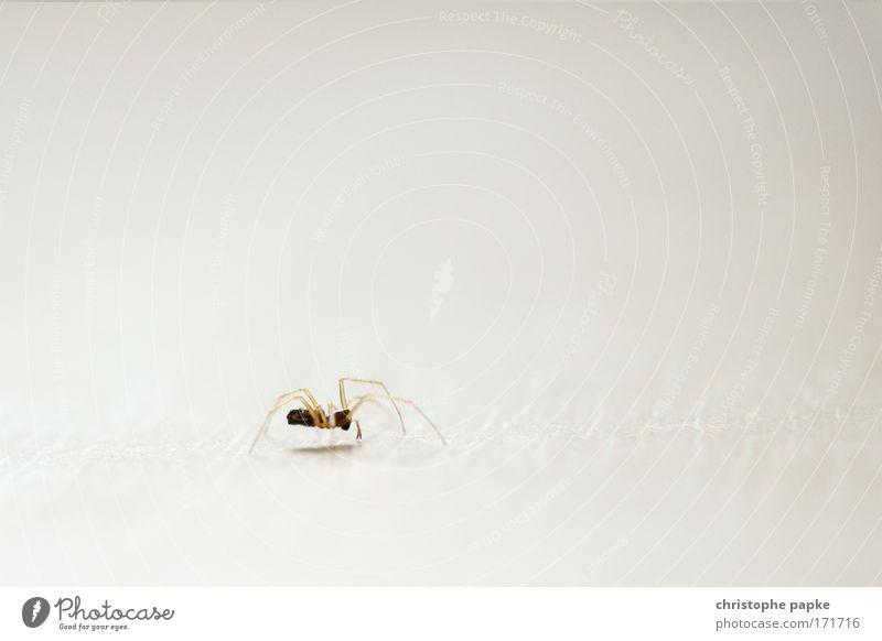 Itsy Bitsy Spider oder: Der Webcrawler Farbfoto Gedeckte Farben Innenaufnahme Nahaufnahme Makroaufnahme Textfreiraum rechts Textfreiraum oben High Key