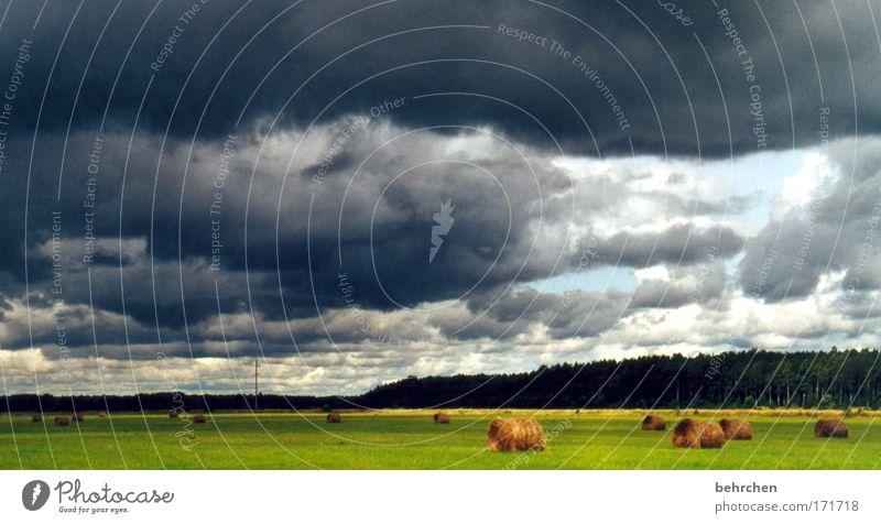 regenschirmwetter Himmel Ferien & Urlaub & Reisen Wolken Ferne Wald Wiese dunkel Freiheit Regen Feld Wind Ausflug bedrohlich Sturm Unwetter Gewitter
