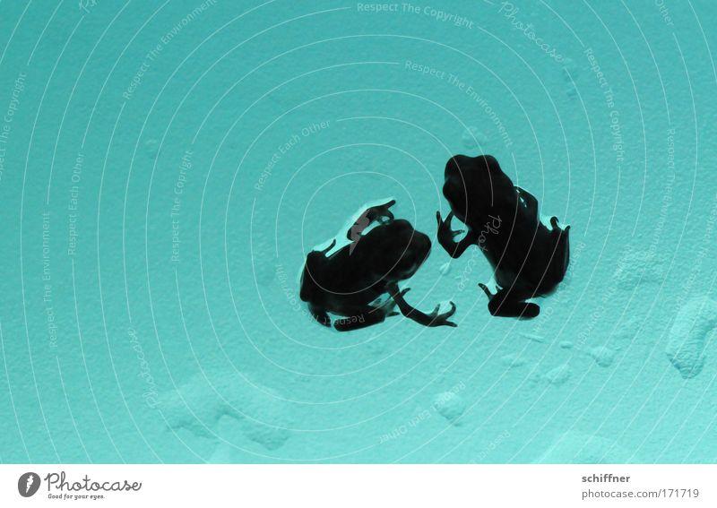 Froschtraum III - willst Du mit mir gehn? Natur Tier Freundschaft Zusammensein Armut Umwelt Finger paarweise Kommunizieren türkis Frosch Verliebtheit hocken Tierliebe Kröte Quaken