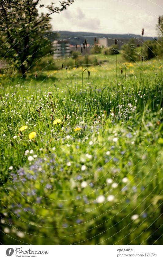 Frühlingswiese Natur schön Pflanze Blume ruhig Leben Wiese Freiheit Berge u. Gebirge Gefühle Landschaft Umwelt Gras Blüte Glück