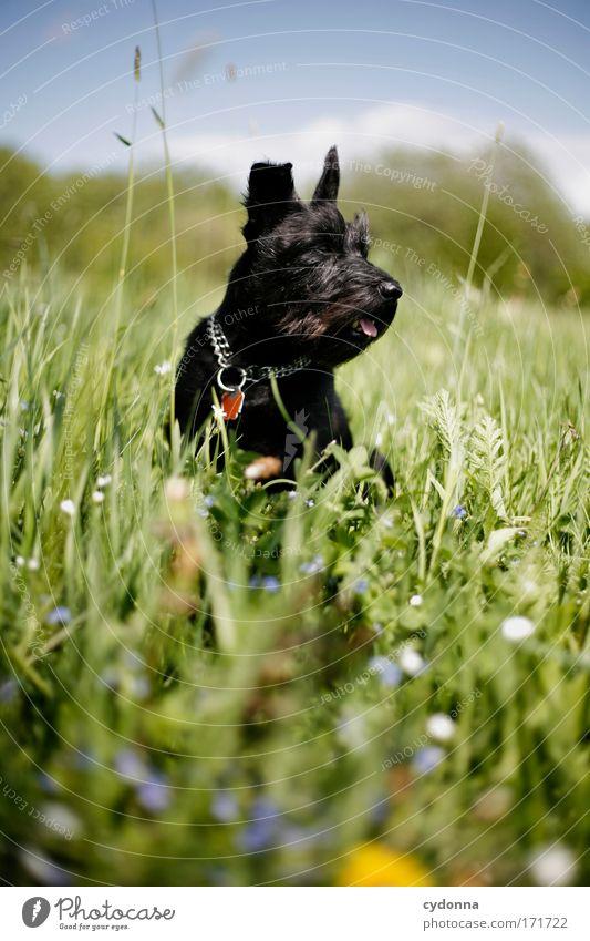 Hundeleben Hund Natur schön Pflanze Blume Tier Umwelt Leben Wiese Gefühle Freiheit Bewegung Gras Frühling Glück träumen