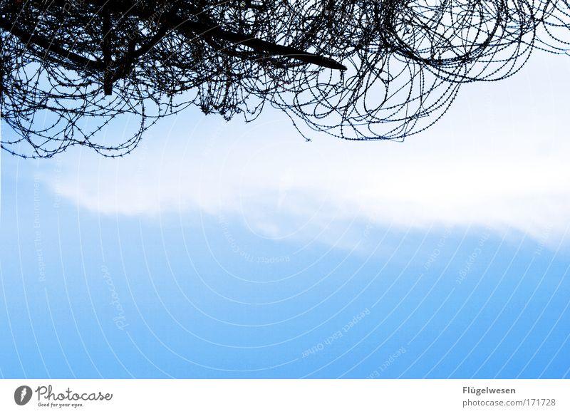 einfach drunter durch krabbeln... Himmel Wolken Umwelt Freiheit laufen bedrohlich tauchen stark Zaun Schmerz Barriere Werkzeug gefangen Aggression