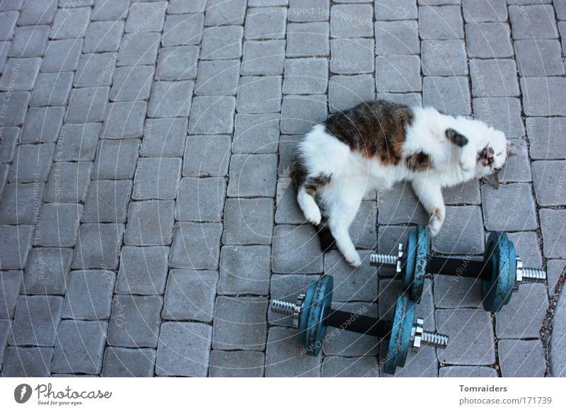 Aufwärmtraining Sportler Hantel Terrasse Pflastersteine Tier Haustier Katze 1 Stein Bewegung liegen warten muskulös Tierliebe Farbfoto Außenaufnahme