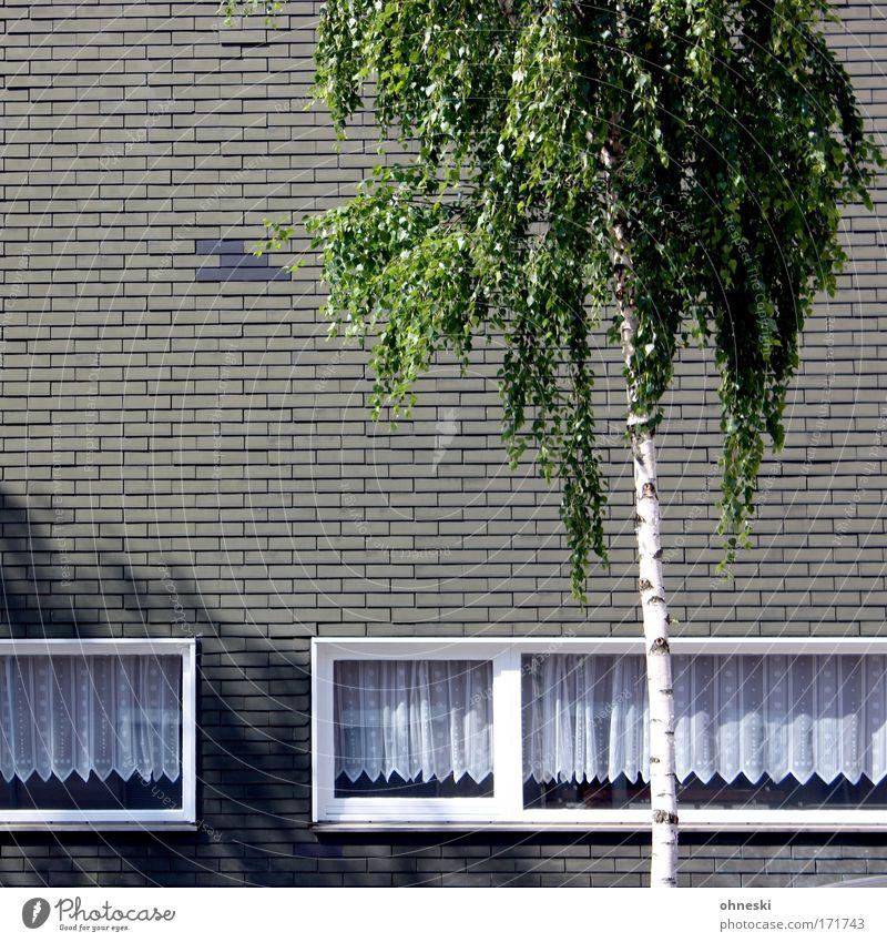 Palm Beach Bochum Gedeckte Farben Außenaufnahme Textfreiraum links Schatten Kontrast Sonnenlicht Sonnenstrahlen Baum Blatt Birke Stadt Haus Architektur Mauer