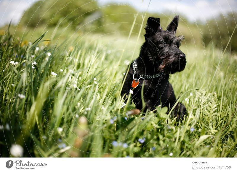 Prachtkerlchen Hund Natur schön Pflanze Blume Tier Umwelt Landschaft Leben Wiese Ernährung Freiheit Bewegung Gras Frühling träumen