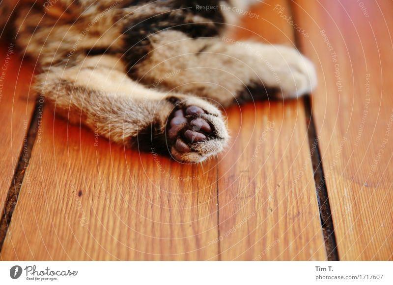 Katzenpfoten Tier Haustier 1 Fürsorge Hauskatze Pfote Flur tatze Farbfoto Innenaufnahme Menschenleer Textfreiraum unten Tag