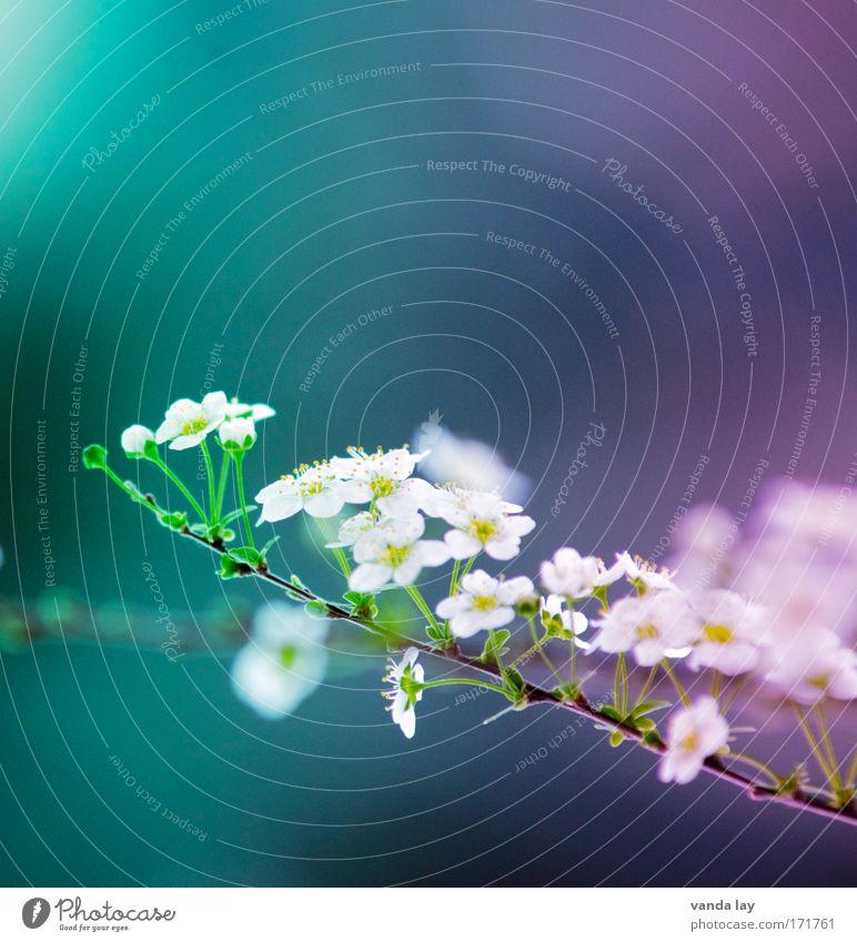 Farbflash Blume Pflanze Sommer Blüte Frühling klein ästhetisch Sträucher Lebensfreude Blühend viele Verschiedenheit zyan unschuldig