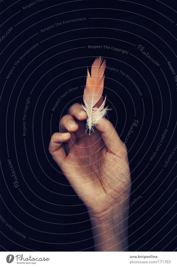 flamingo.feder Haut Arme Hand Finger 1 Mensch Umwelt Natur Tier Flamingo berühren festhalten weich rosa Feder Federschmuck leicht Leichtigkeit Fingerabdruck