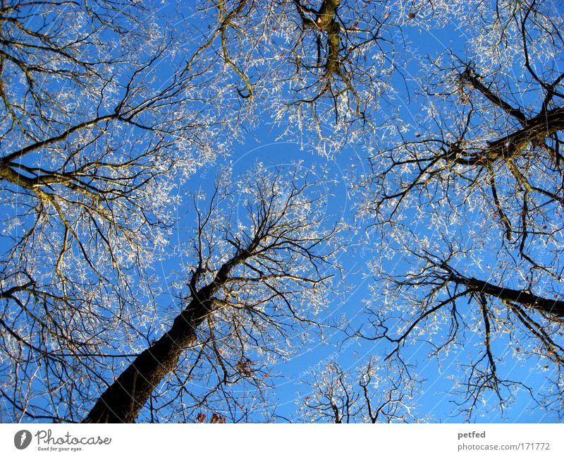 Winter im Sommer Ausflug Schnee Wolkenloser Himmel Eis Frost Baum Wald alt hoch kalt hart Farbfoto Außenaufnahme Menschenleer Tag Froschperspektive