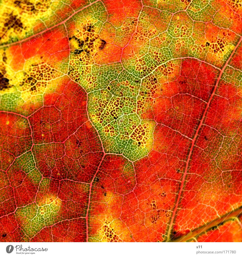 colors of nature Natur alt grün schön Baum rot Pflanze Blatt Umwelt gelb Herbst Park braun Stimmung Kraft Wind
