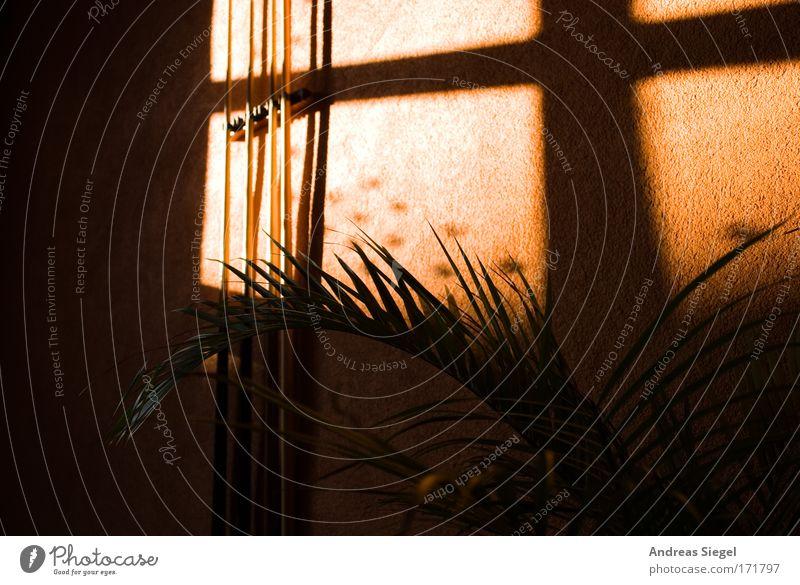 Bereit zum Einlochen Pflanze Freude dunkel Erholung Wand Spielen Stil Fenster Glück Mauer Lifestyle Fröhlichkeit Coolness Bar Freizeit & Hobby Dekoration & Verzierung