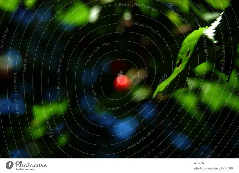 der rote Punkt Natur Baum grün blau rot dunkel Zufriedenheit Umwelt Sträucher Kirsche Kirschbaum