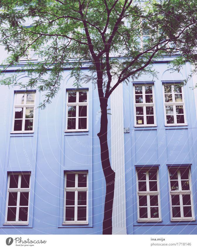 Spaziergang durch Wien Ferien & Urlaub & Reisen Stadt blau Farbe Baum Haus Fenster Architektur Wand Gebäude Mauer Fassade Stadtleben Häusliches Leben ästhetisch