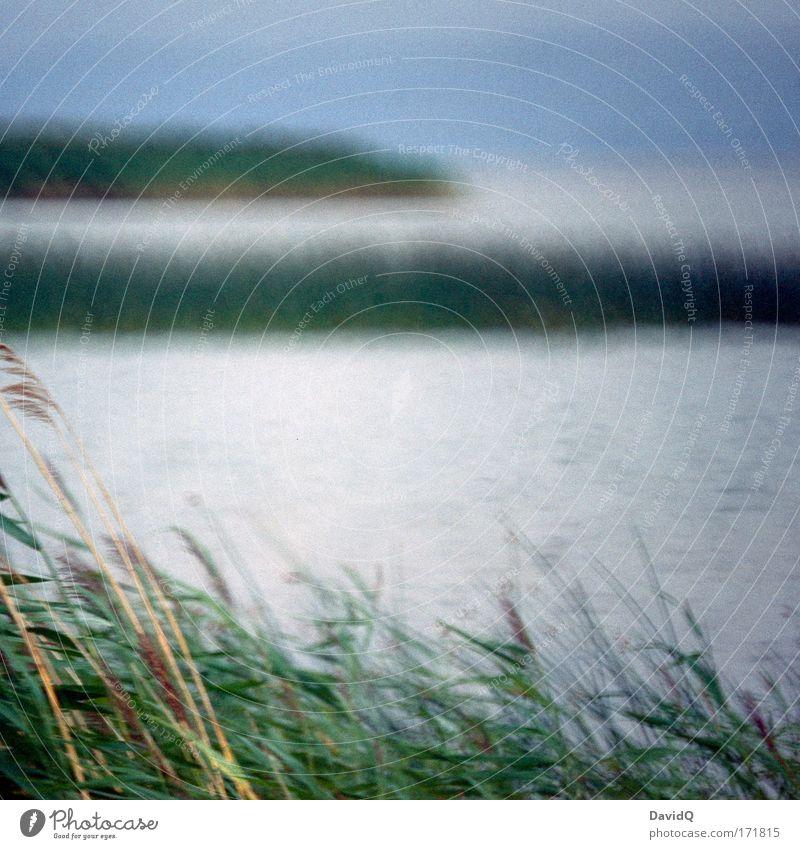 lake Natur Wasser Himmel Pflanze See Landschaft Umwelt Schilfrohr Seeufer Grünpflanze