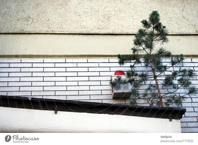 Alarmkiefer Natur weiß Baum Stadt rot Lampe Freiheit Traurigkeit Hoffnung Sicherheit Wachstum gefährlich wild Lebensfreude Fliesen u. Kacheln Hinweisschild