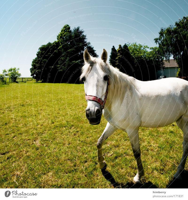 schimmel ich? Natur Himmel Baum Pflanze Sommer Tier Wiese Gras Landschaft Zufriedenheit Kraft Pferd Hoffnung ästhetisch Lebensfreude Neugier