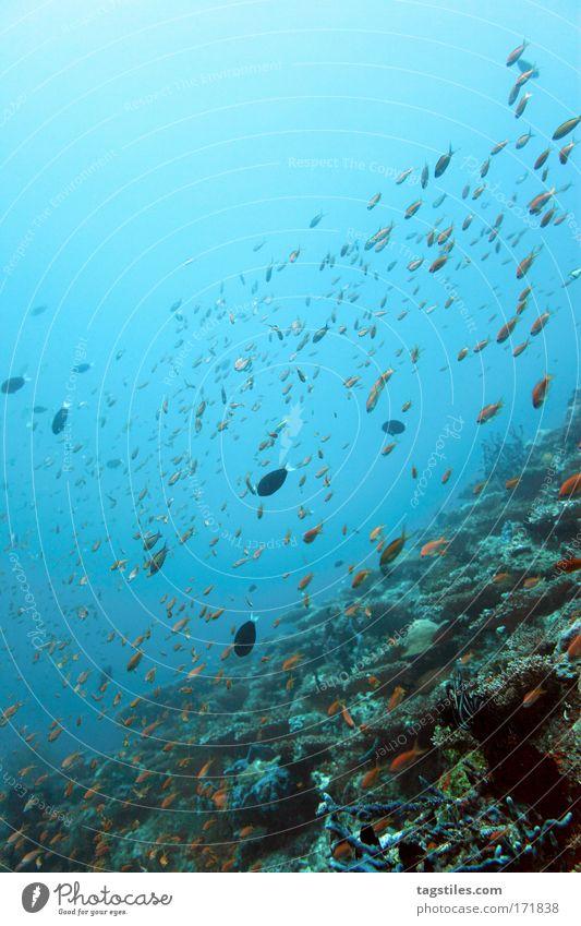 MIARU GALA TILA - ARI ATOLL Meer Ferien & Urlaub & Reisen ruhig Erholung Freiheit Unterwasseraufnahme Fisch tauchen Idylle entdecken Indien Malediven Paradies