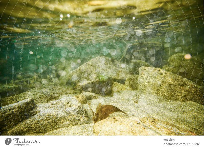 abgetaucht Umwelt Natur Landschaft Wasser Sommer Felsen Meer natürlich braun gelb grau grün Brandung sprudelnd Luftblase Farbfoto Außenaufnahme