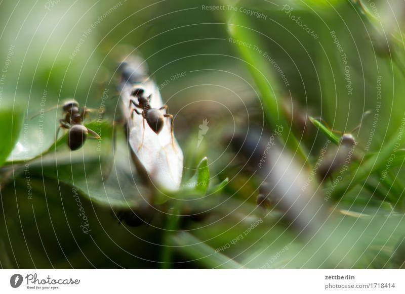 Weibchen unten, Männchen oben Natur Sommer Textfreiraum Flügel Sex Hochzeit Insekt Politik & Staat Schwarm König Ameise Hautflügler Jungfrau Schwärmerei