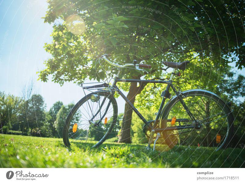 Fahrrad-Romantik Natur Ferien & Urlaub & Reisen Sommer Sonne Baum Erholung ruhig Wald Umwelt Leben Wiese natürlich Sport Gesundheit Garten Freiheit