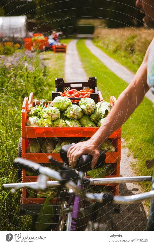 Reiche Ernte Lebensmittel Gemüse Kohl Ernährung Bioprodukte Vegetarische Ernährung sportlich Fitness Freizeit & Hobby Gartenarbeit Fahrradfahren Mensch maskulin