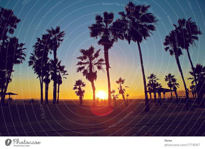 Venice Beach sunset Umwelt Sand Wasser Wolkenloser Himmel Sonnenlicht Sommer Schönes Wetter Pflanze Baum exotisch Park Strand Meer Pazifikstrand Erholung
