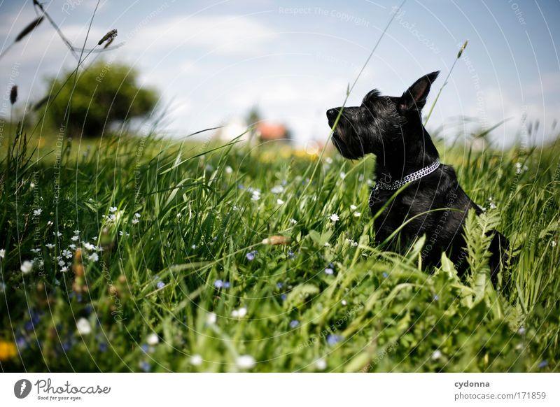 Ökohund Hund Natur schön Pflanze Blume Tier Erholung Umwelt Landschaft Leben Wiese Freiheit Bewegung Gras Frühling träumen
