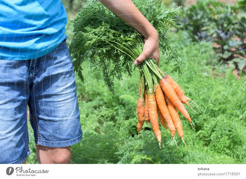 Mensch Natur Pflanze Sommer grün Hand Blatt natürlich Garten frisch Sauberkeit Bauernhof Ernte Ackerbau Vegetarische Ernährung Gartenarbeit