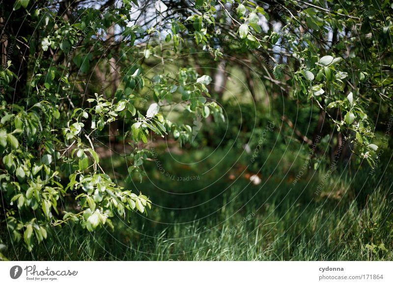 Grün Natur grün schön Baum Pflanze Blatt ruhig Umwelt Wiese Leben Gefühle Bewegung Gras Freiheit Traurigkeit träumen