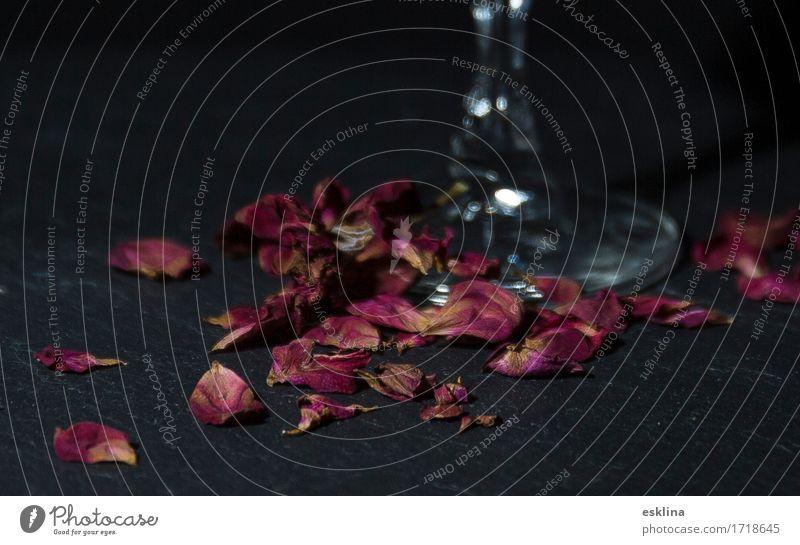 Rosenblüten / Rosenblüten schön Blume Erotik schwarz Blüte Liebe Stil Feste & Feiern Stimmung rosa elegant Glas ästhetisch Romantik trinken